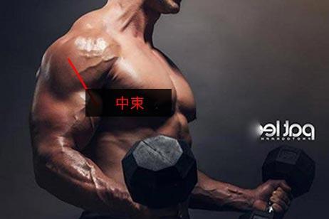 小腿三头肌_肩部-中束,三角肌中束锻炼方法,三角肌中束训练及怎么练教程 ...