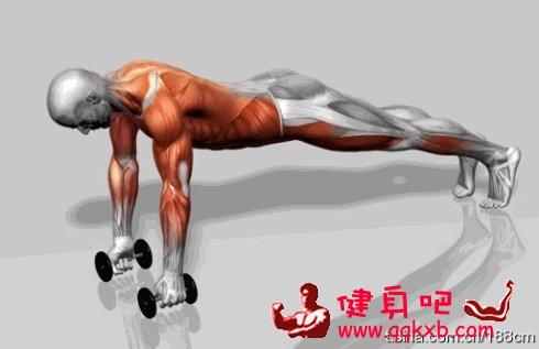 俯卧撑锻炼肌肉直观图