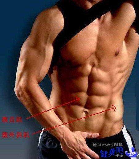 胸肌图解:胸肌肌肉图示及英文名称介绍
