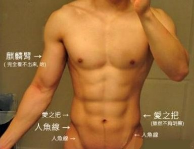 腹肌图解:腰腹部肌肉图示及英文名称介绍
