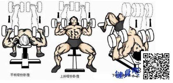 胸肌锻炼方法大全图解:塑造完美胸肌