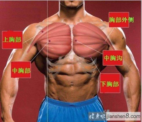 健身房锻炼胸肌的十大方法