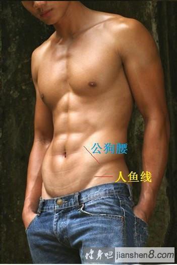 """人体肌肉_男人""""美""""与""""性感""""指标 人鱼线与狗公腰_健身吧"""