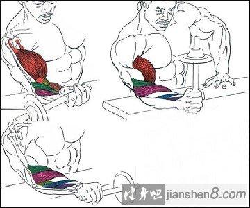 矢量图手臂怎么画