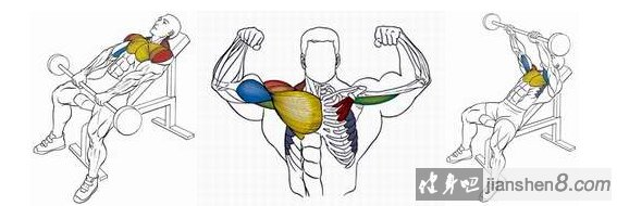 三角肌锻炼方法,上斜杠铃前上举动作详解