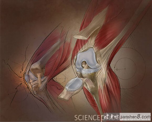 减速带_膝关节3D结构解剖图,带你去看你的膝盖深处(2)_健身吧