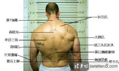背部肋骨结构图