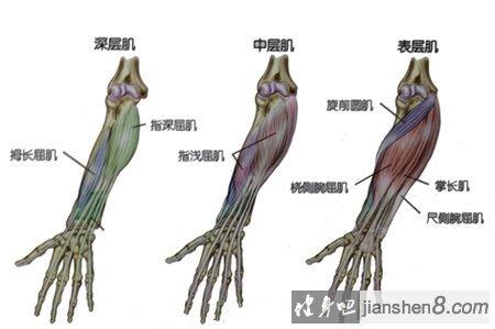 小臂肌肉怎么练?小臂肌肉锻炼图解