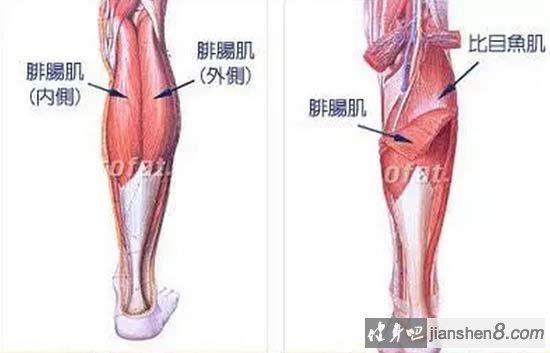 腿部肌锻炼方法图解
