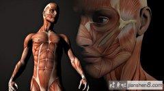 健身这么久!人体最强的肌肉是哪块你知道吗?
