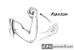 健身小词典:屈肌和伸肌