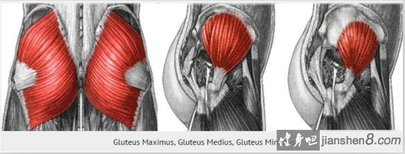 臀中肌和臀小肌的定位图片_健身误区:练臀小肌可以强化臀部下缘?_健身吧