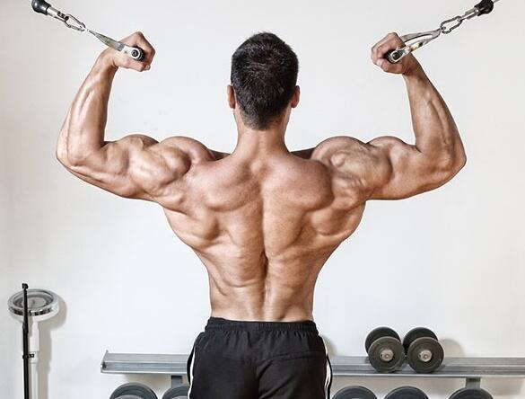 背阔肌_背阔肌下部怎么练背阔肌下部锻炼动作推荐_健身吧